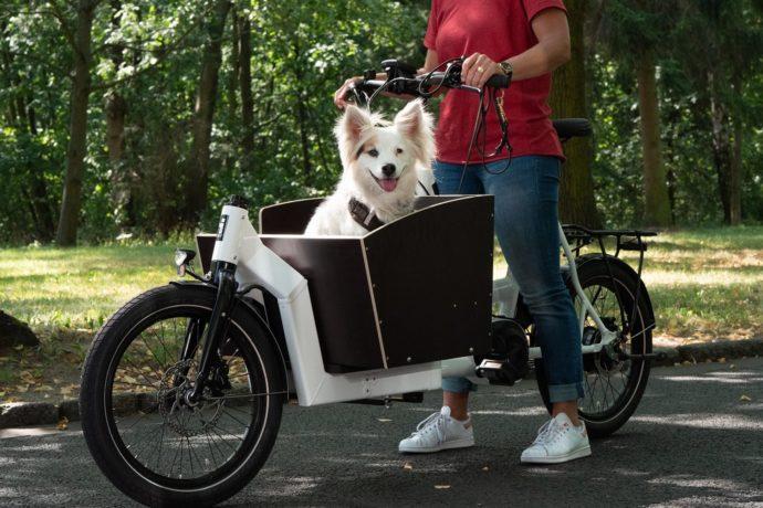 i:SY Cargo mit Hund
